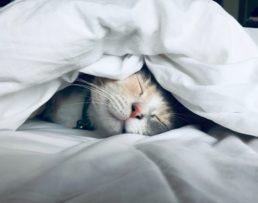 寝てストレスを解消