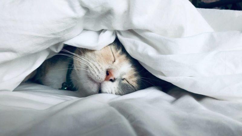 かわいい猫のTシャツのイメージ